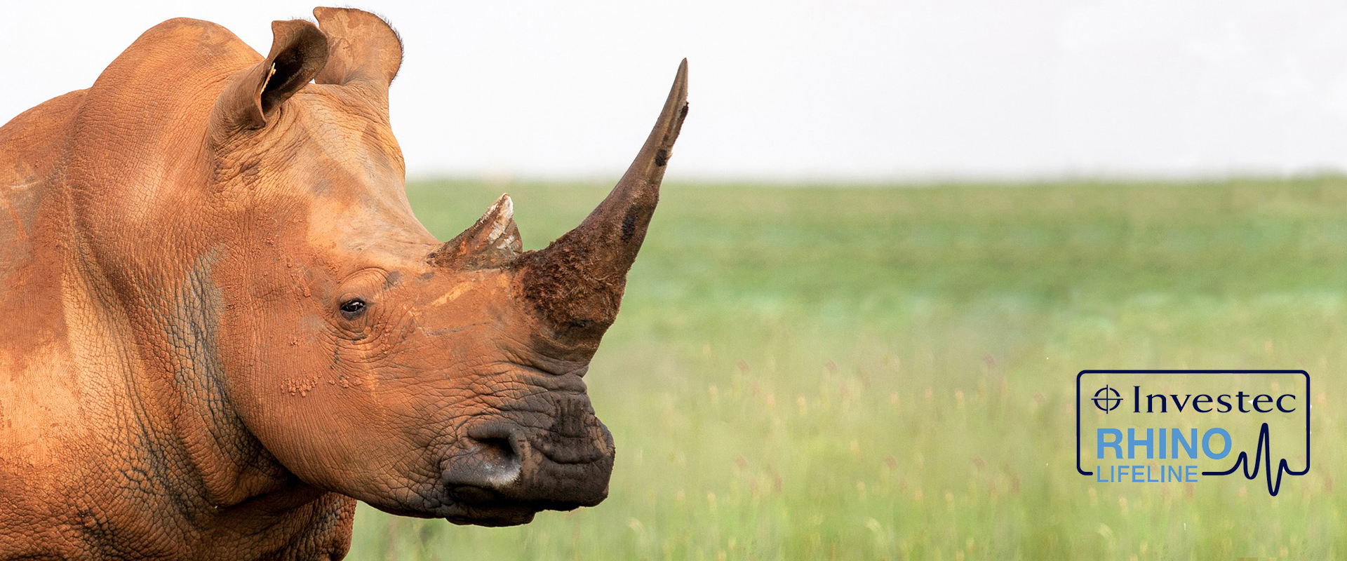rhino on grasslands
