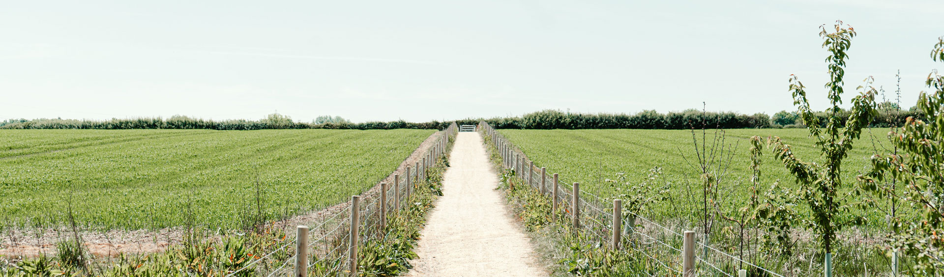 Dirst path running between two fields