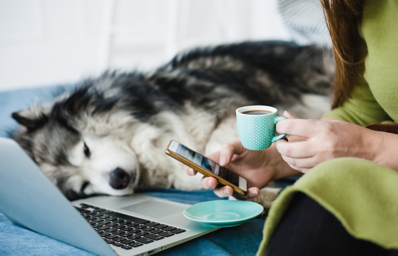 Husky cuddles up on the bed to woman with coffee, phone, and laptop