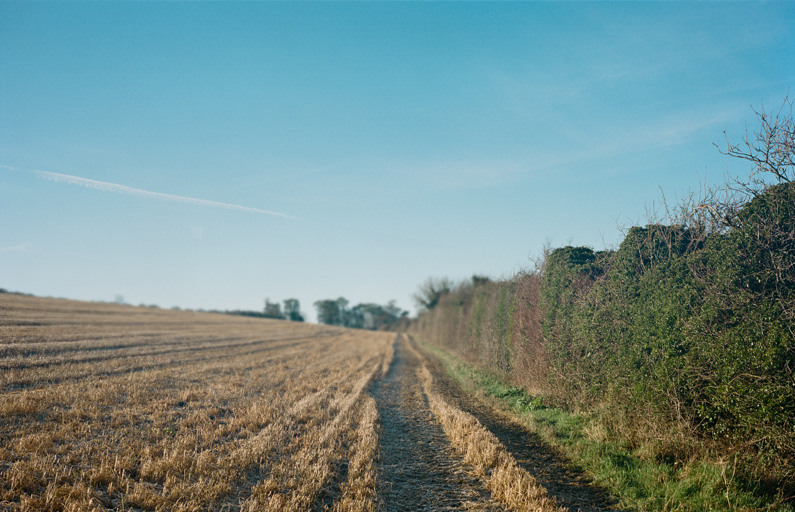 Well-trodden path through a harvested field