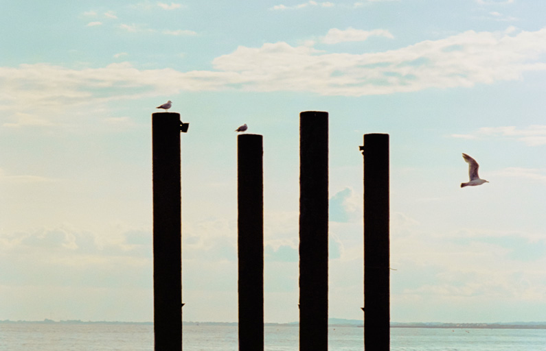 Seagulls perched on wooden posts by the sea